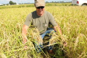 Rice Trial Tennessee